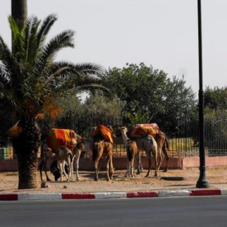photos exposition maroc